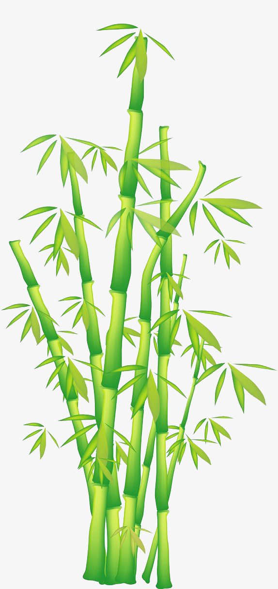 574x1216 Bamboo Vector Download, Bamboo Clipart, Bamboo Bar Vector, Green