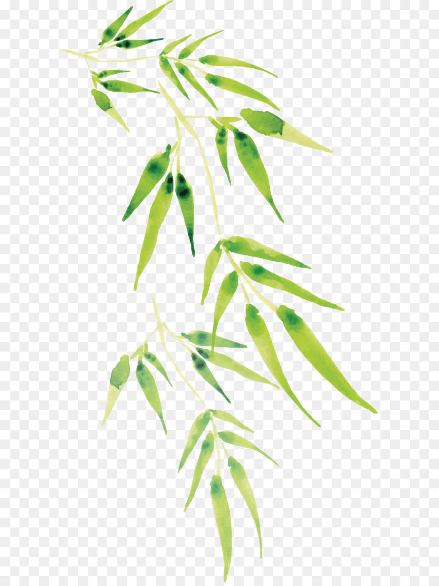 900x1200 Cartoon Bamboo Vector Png Download