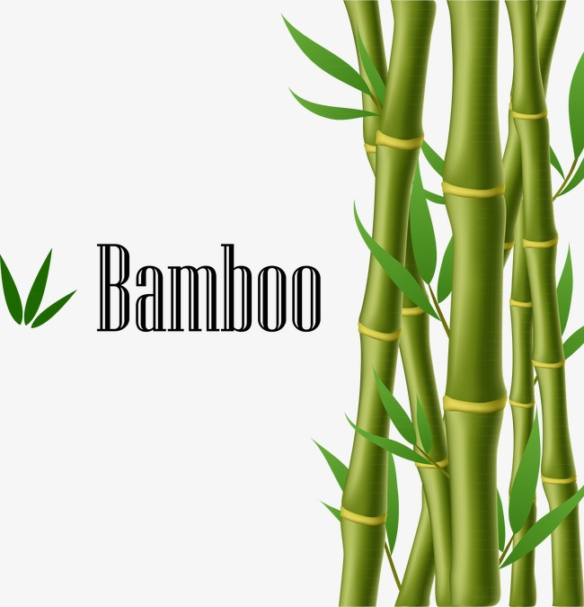 650x675 Green Bamboo, Bamboo Vector, Green Png And Vector For Free Download