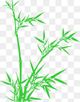 260x331 Lucky Bamboo Png, Vectors, Psd, And Clipart For Free Download