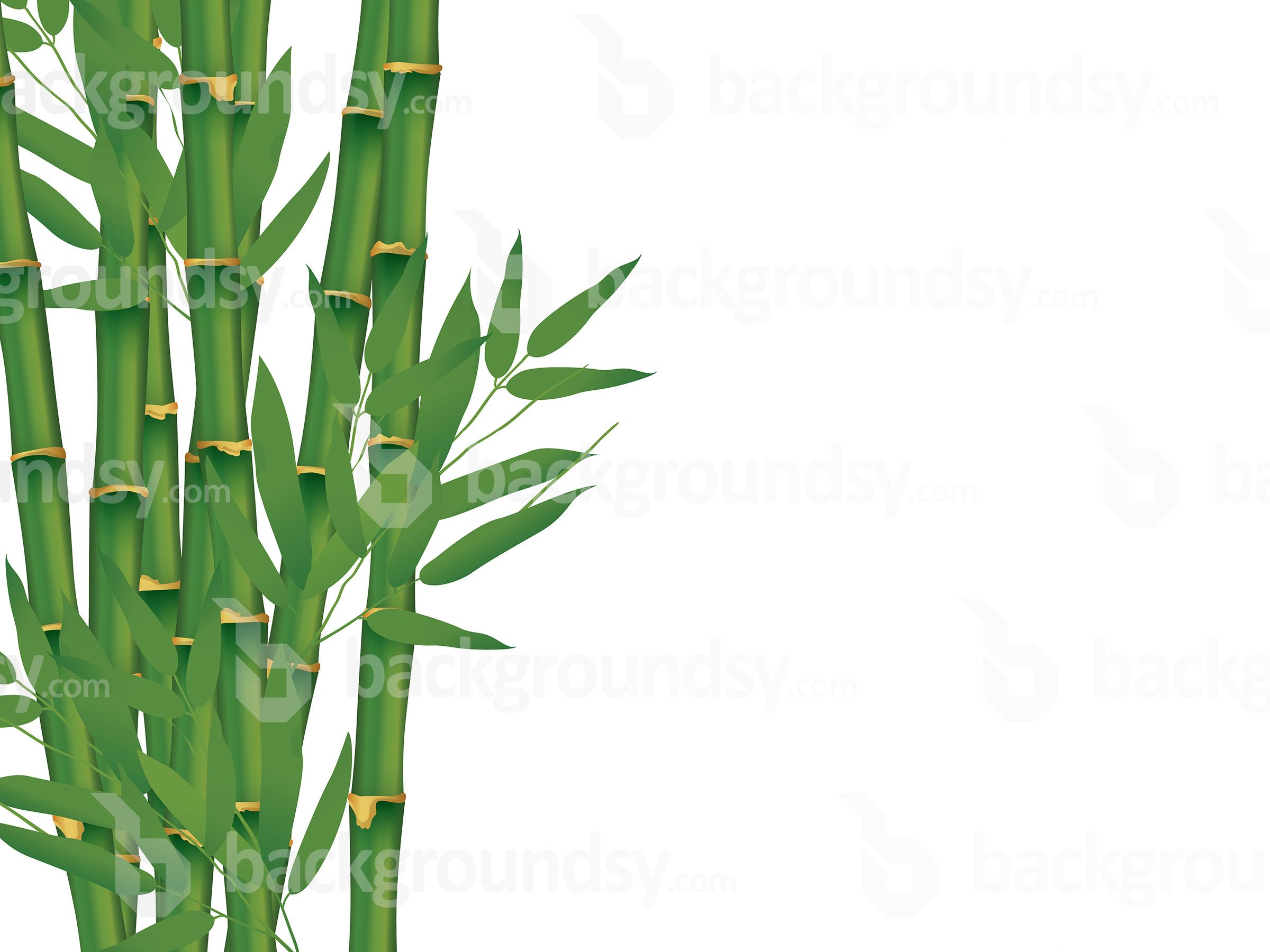 2400x1800 Vector Bamboo Isolated