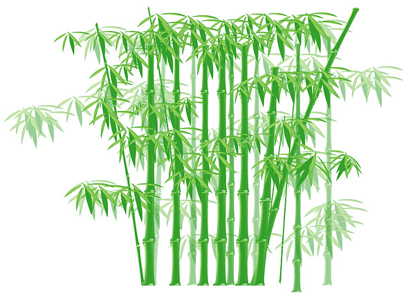 600x431 Bamboo