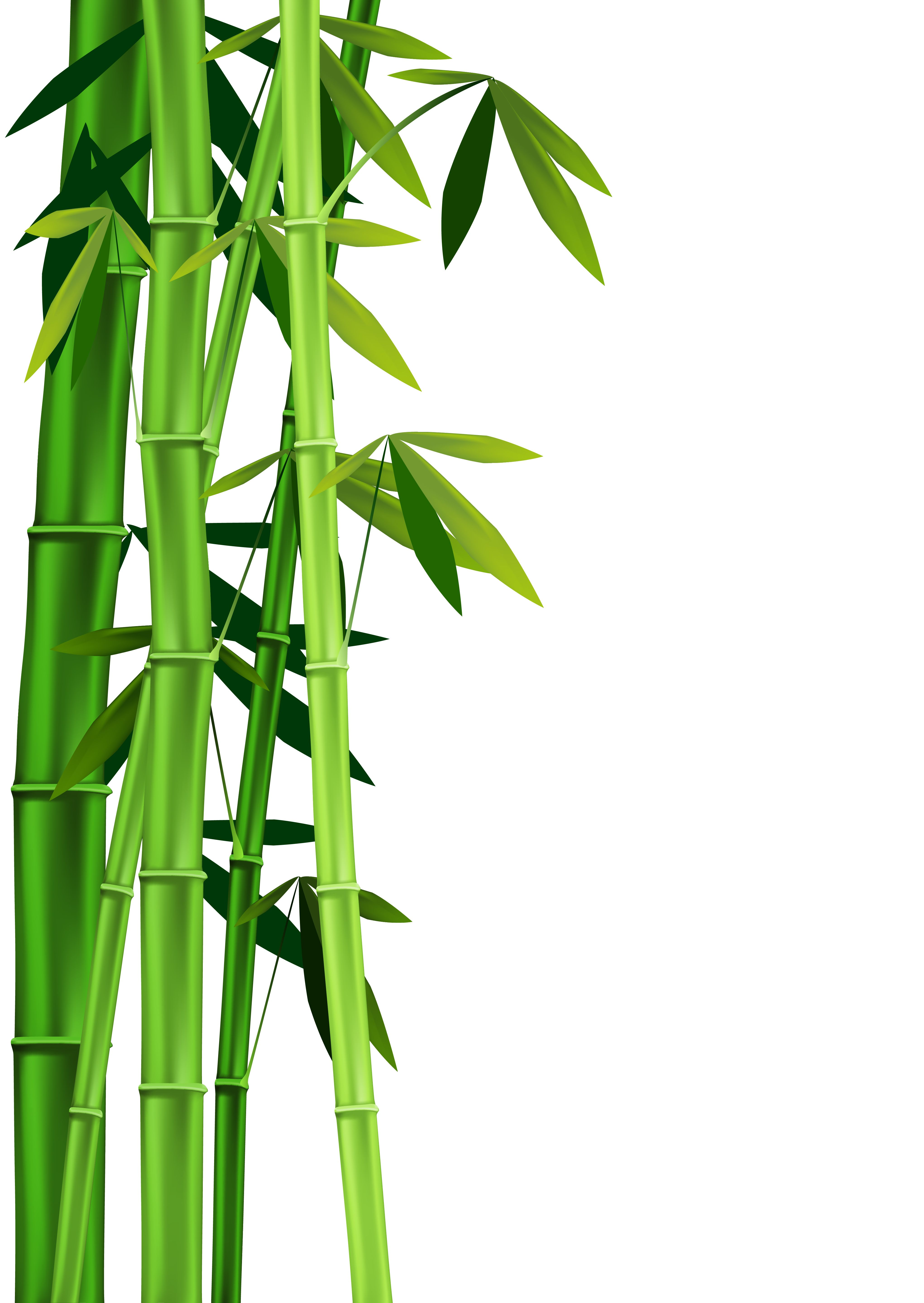 4082x5756 Images Of Bamboo