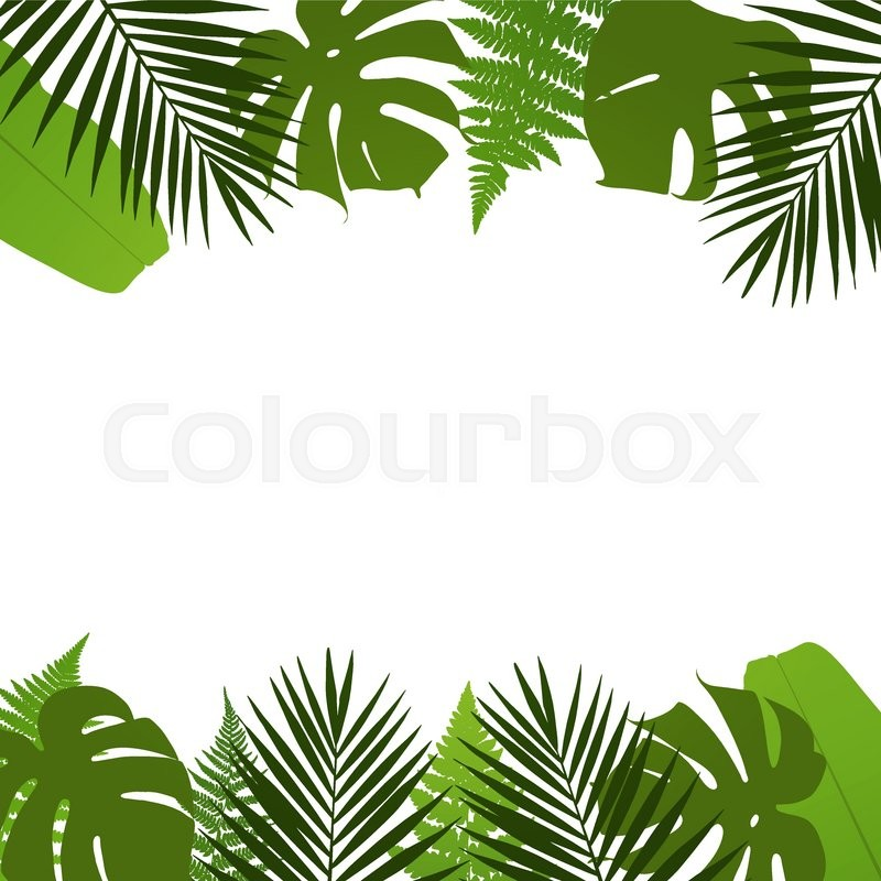 800x800 Tropical Leaves Background With Palm,fern,monstera And Banana