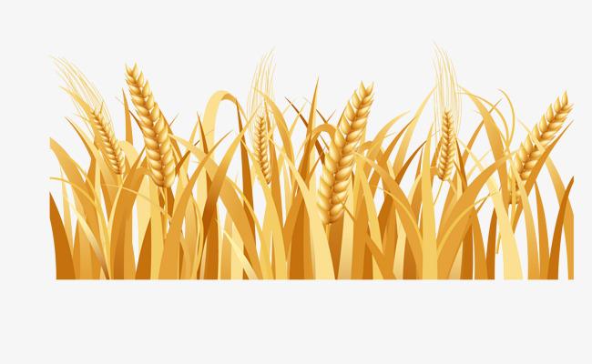 650x400 Barley Farmland, Countryside, Rural, Rural Farmland Png And Vector