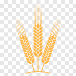 150x150 Slipart Wheat Cereal Plant Barley Vector Crop Vector Cut Out