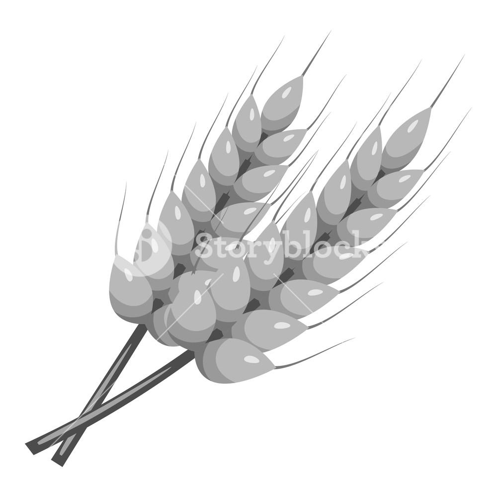 1000x1000 Stalks Of Barley Icon. Gray Monochrome Illustration Of Stalks Of