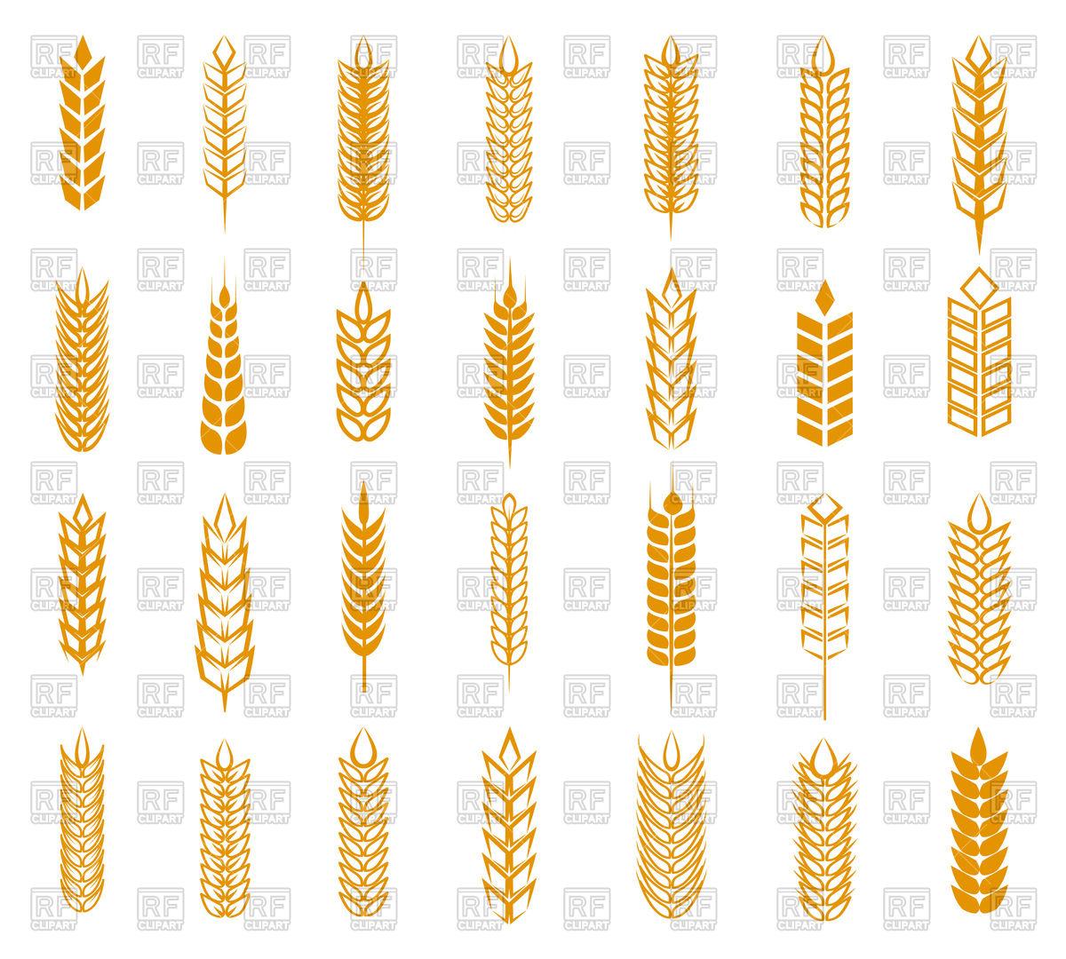 1200x1080 Wheat, Rye And Barley Ear Set Vector Image Vector Artwork Of