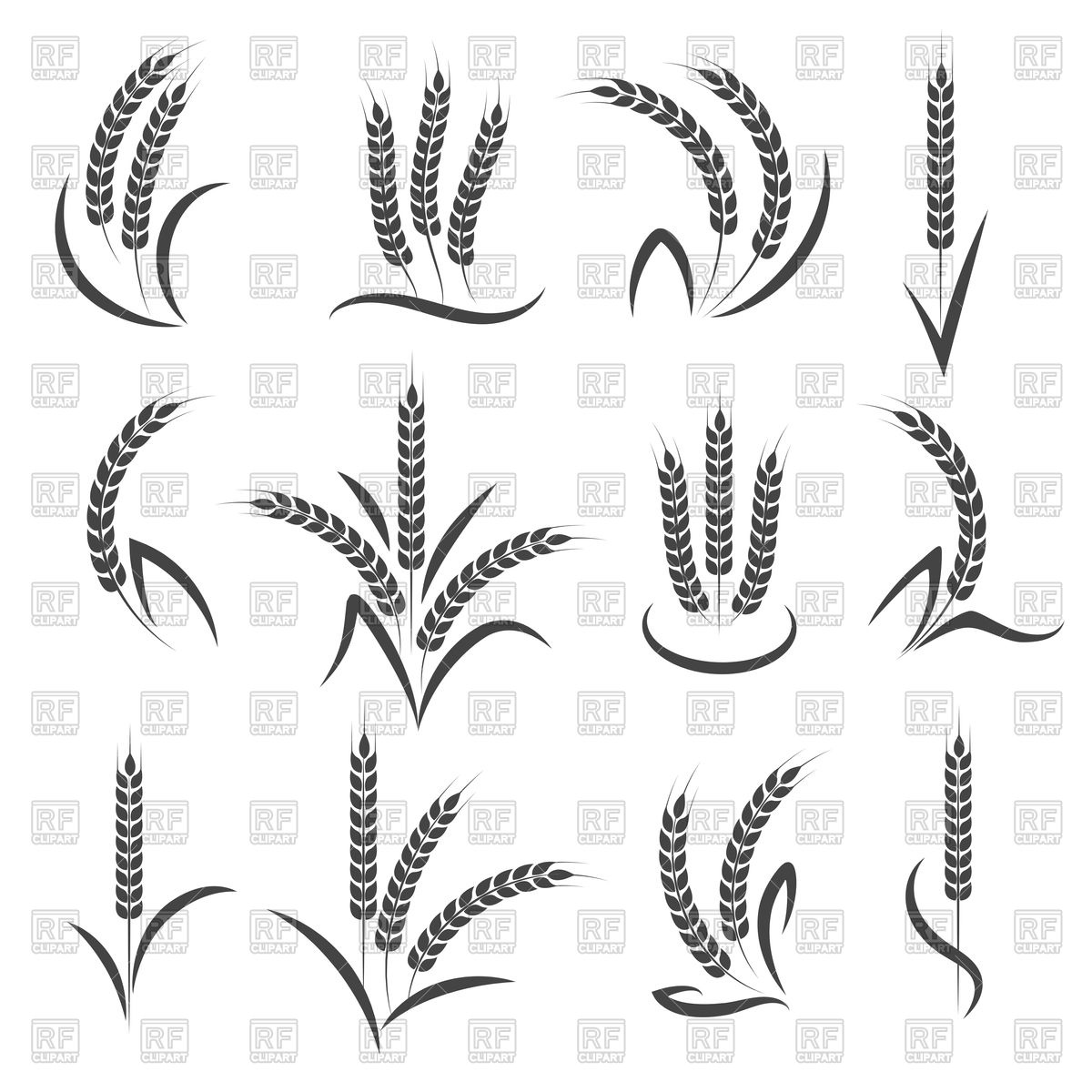 1200x1200 Wheat Or Barley Ears Branch Vector Image Vector Artwork Of
