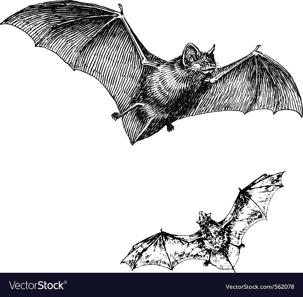 1000x980 Bat Vector 562078