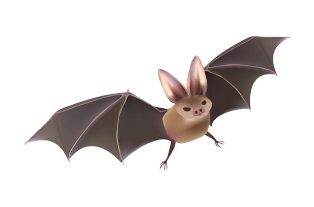 626x414 Bats Vectors, Photos And Psd Files Free Download