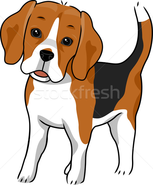 496x600 Beagle Vector Illustration Lenm ( 2148531) Stockfresh