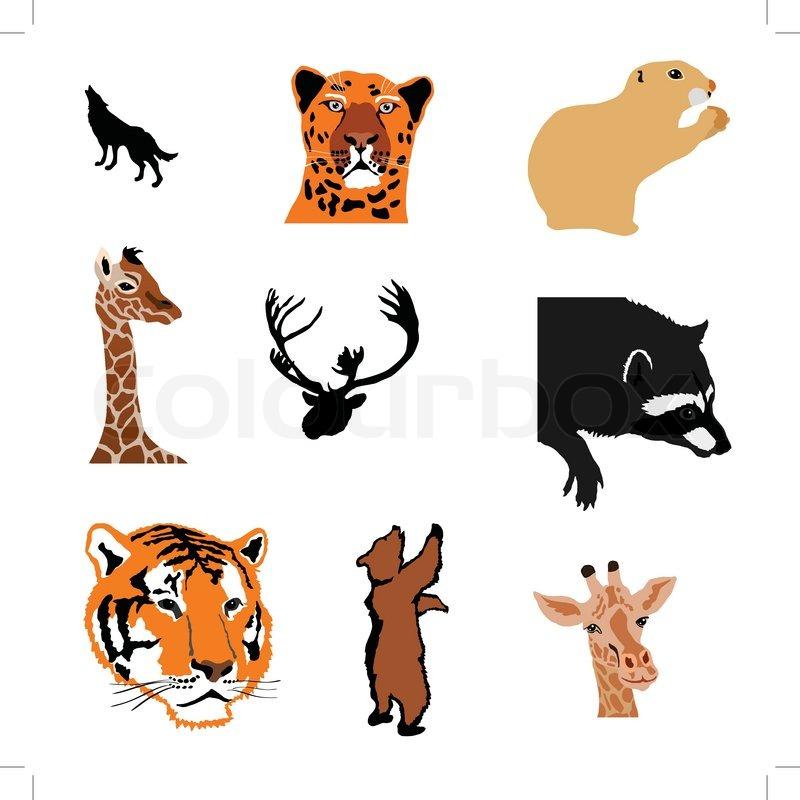 800x800 Marmot,giraffe,caribou,raccoon,tiger,bear,giraffe,bear Cub Stock