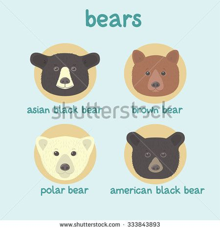 450x470 Bear Faces Vector Set Asian Black Bear, Brown Bear, Polar Bear