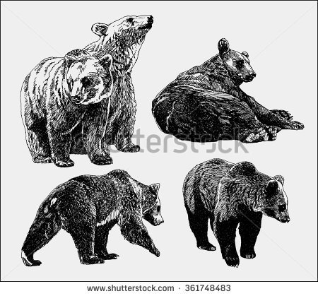 450x419 Drawn Grizzly Bear Vector