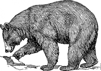 425x297 Free Download Of Black Bear Vector Graphics And Illustrations