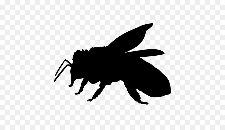 900x520 European Dark Bee Insect Pollinator Clip Art