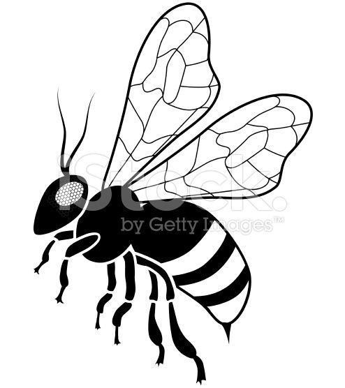 494x556 A Vector Illustration Of A Honey Bee In Black And White Side View