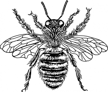 425x361 Free Download Of Bee Vector Graphics And Illustrations