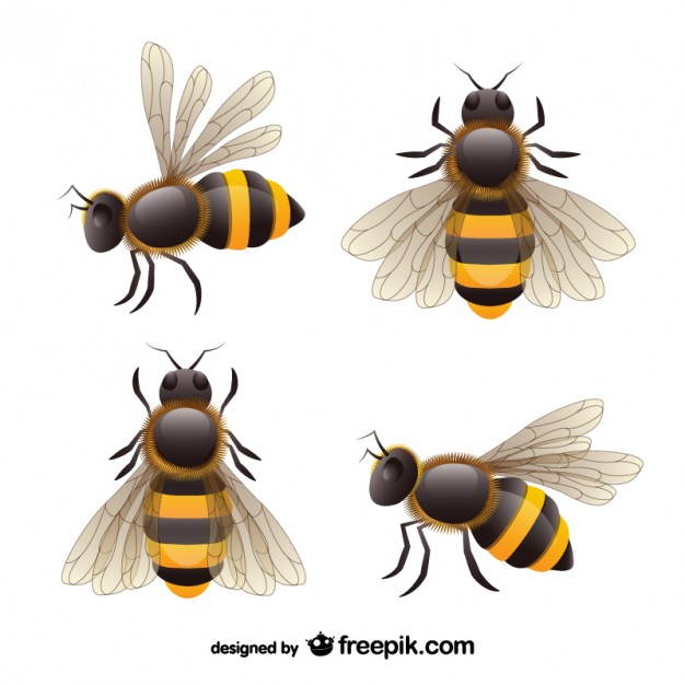 626x626 Realistic Bees Set Vector Free Download