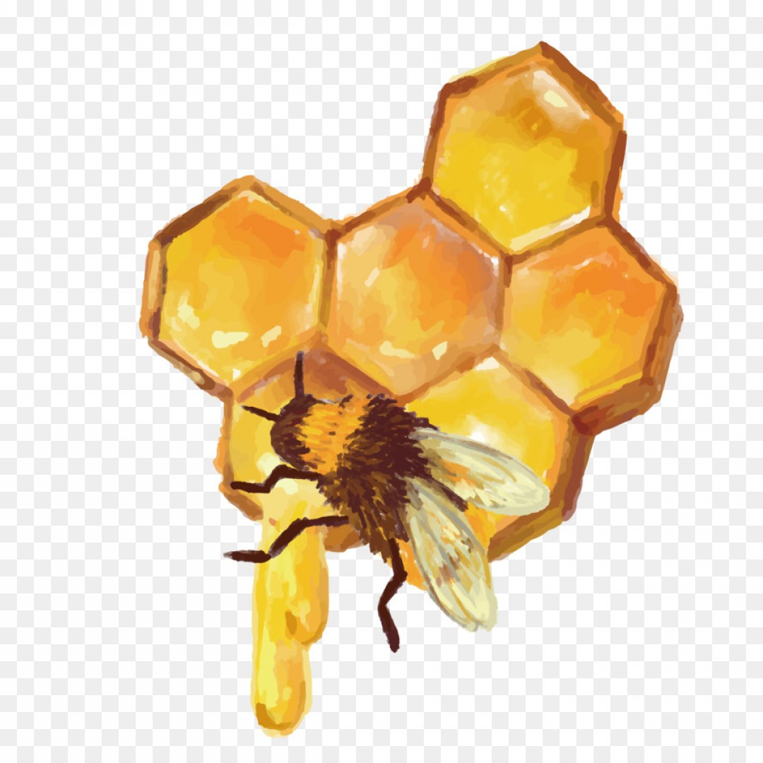 The Best Free Honeycomb Vector Images  Download From 164 Free Vectors Of Honeycomb At Getdrawings