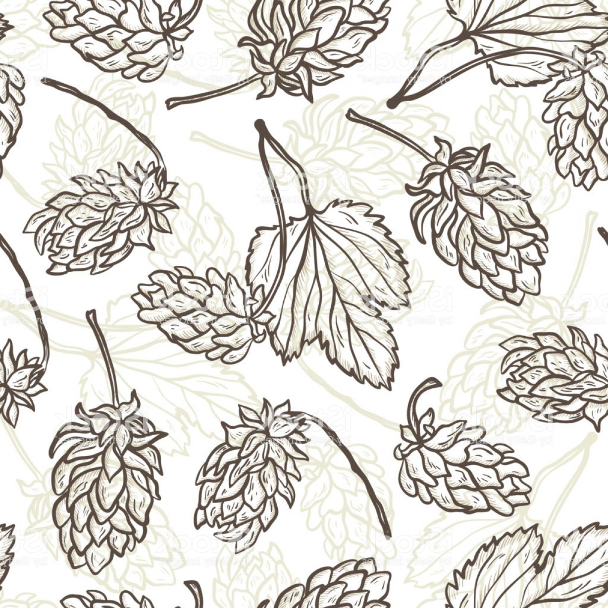 1228x1228 Beer Hops Vector Seamless Pattern Common Hop Or Humulus Lupulus
