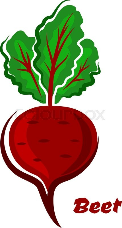 429x800 Fresh Cartoon Beet Or Beetroot Vegetable With Green Leaves And