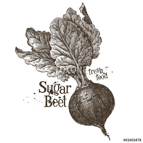 500x500 Beet Vector Logo Design Template. Fresh Vegetables, Food Or Stock