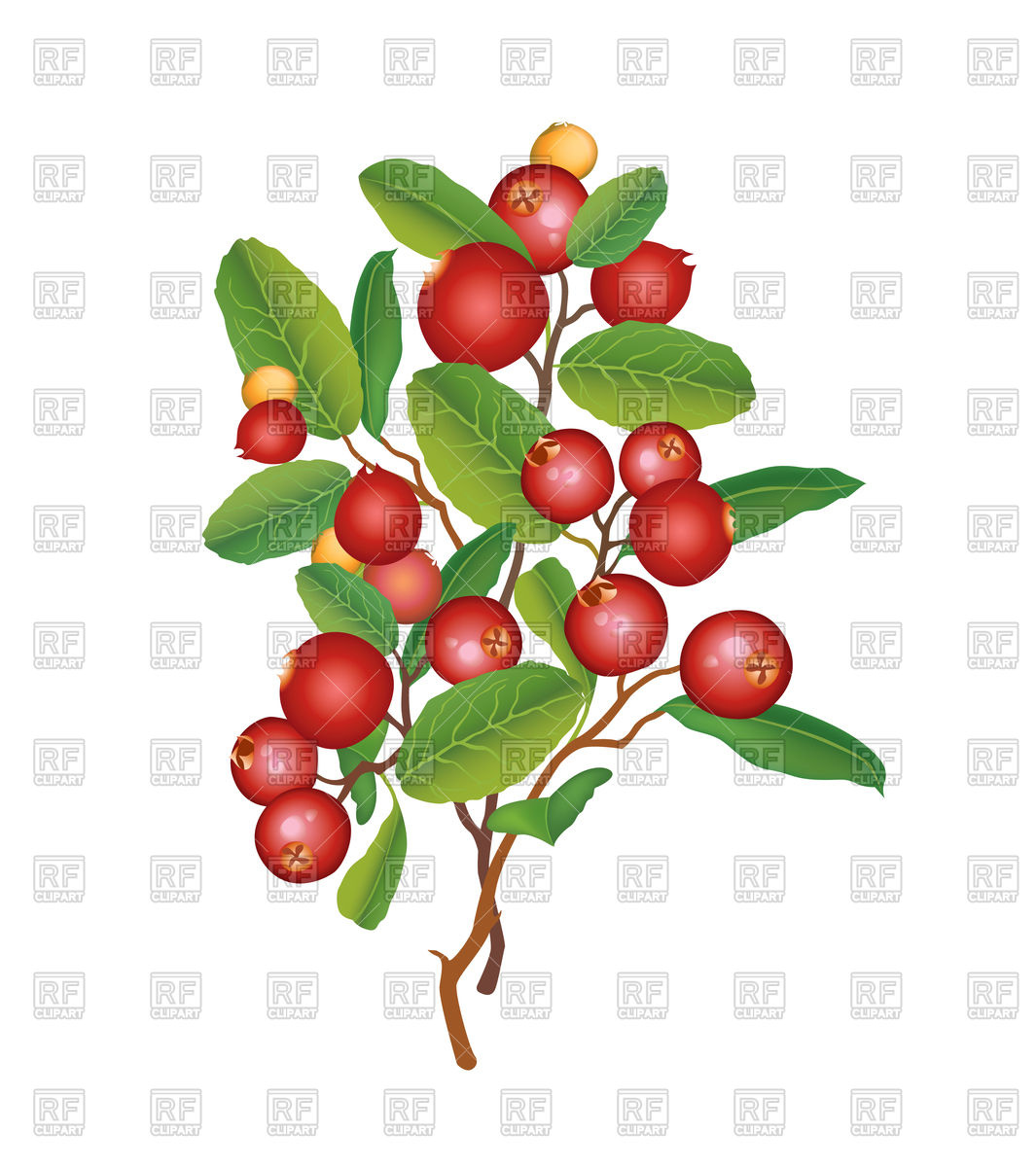 1065x1200 Cranberry Branch, Berry Vector Image Vector Artwork Of Food And