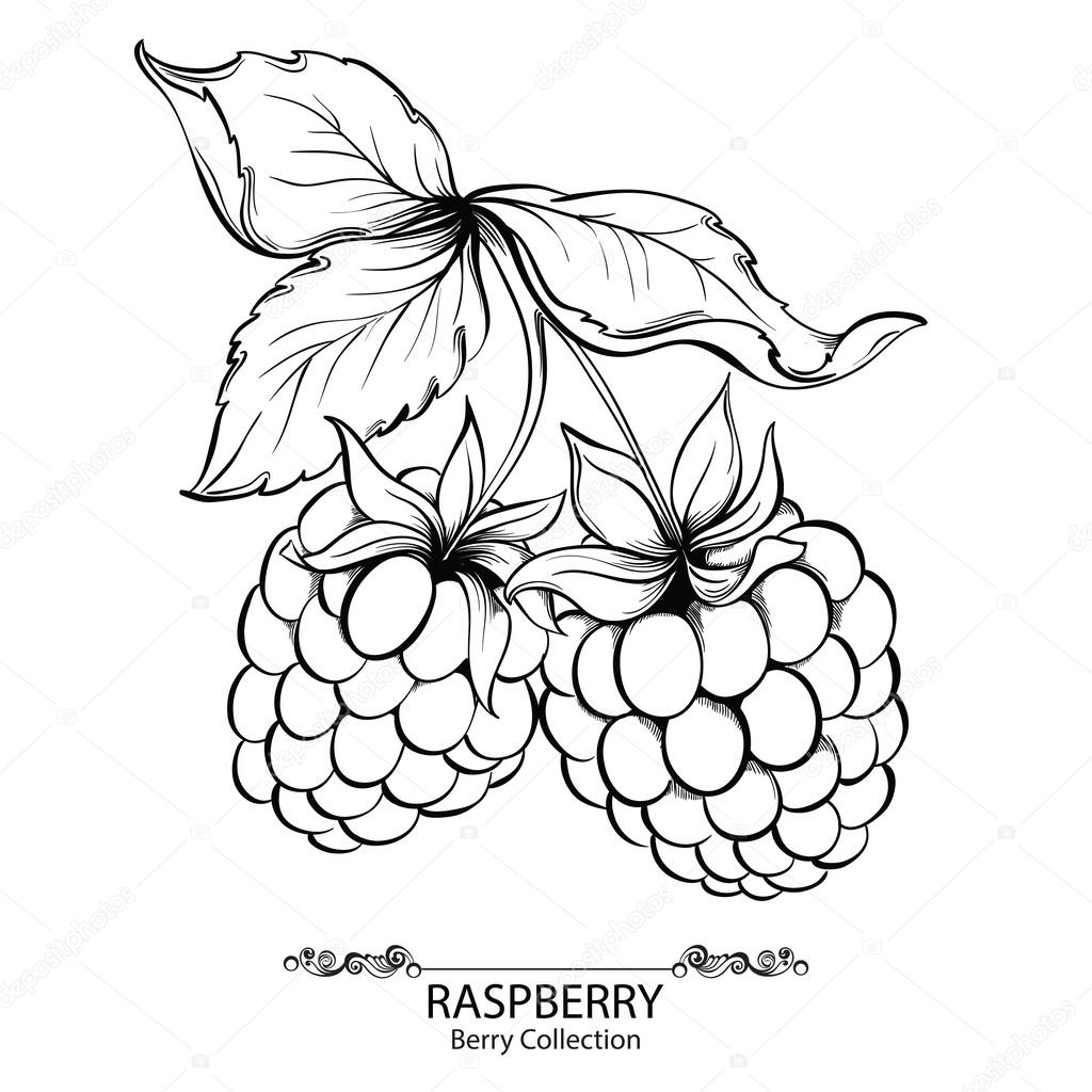 1024x1024 Drawn Berry Vector