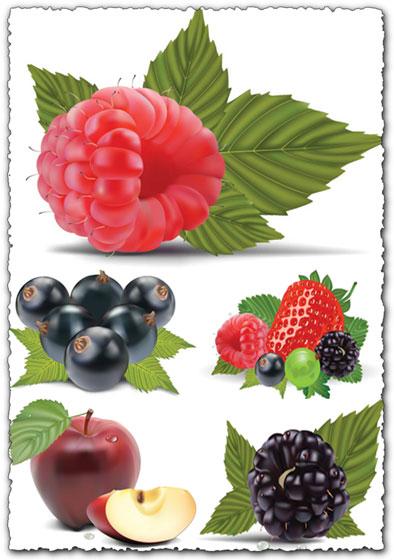 394x560 Fruits And Berries Vectors