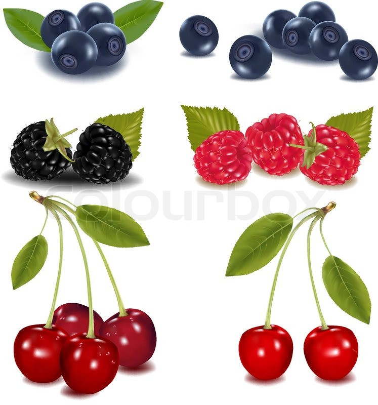 747x800 Photo Realistic Vector Illustration. Group Of Berries. Stock