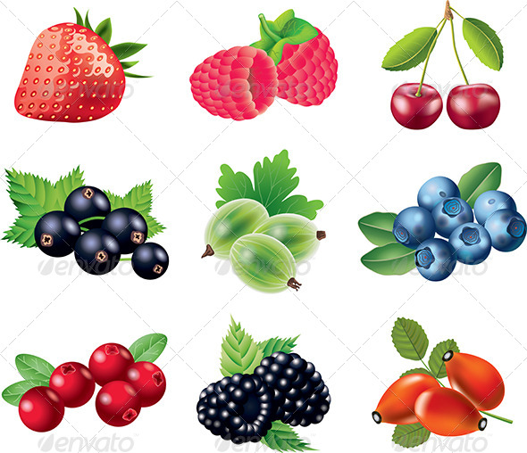 590x508 Popular Berries Vector Set By Andegro4ka Graphicriver