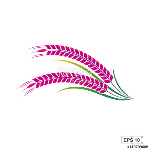 500x500 Rice,rice Berry,vector Illustration Stock Image And Royalty Free