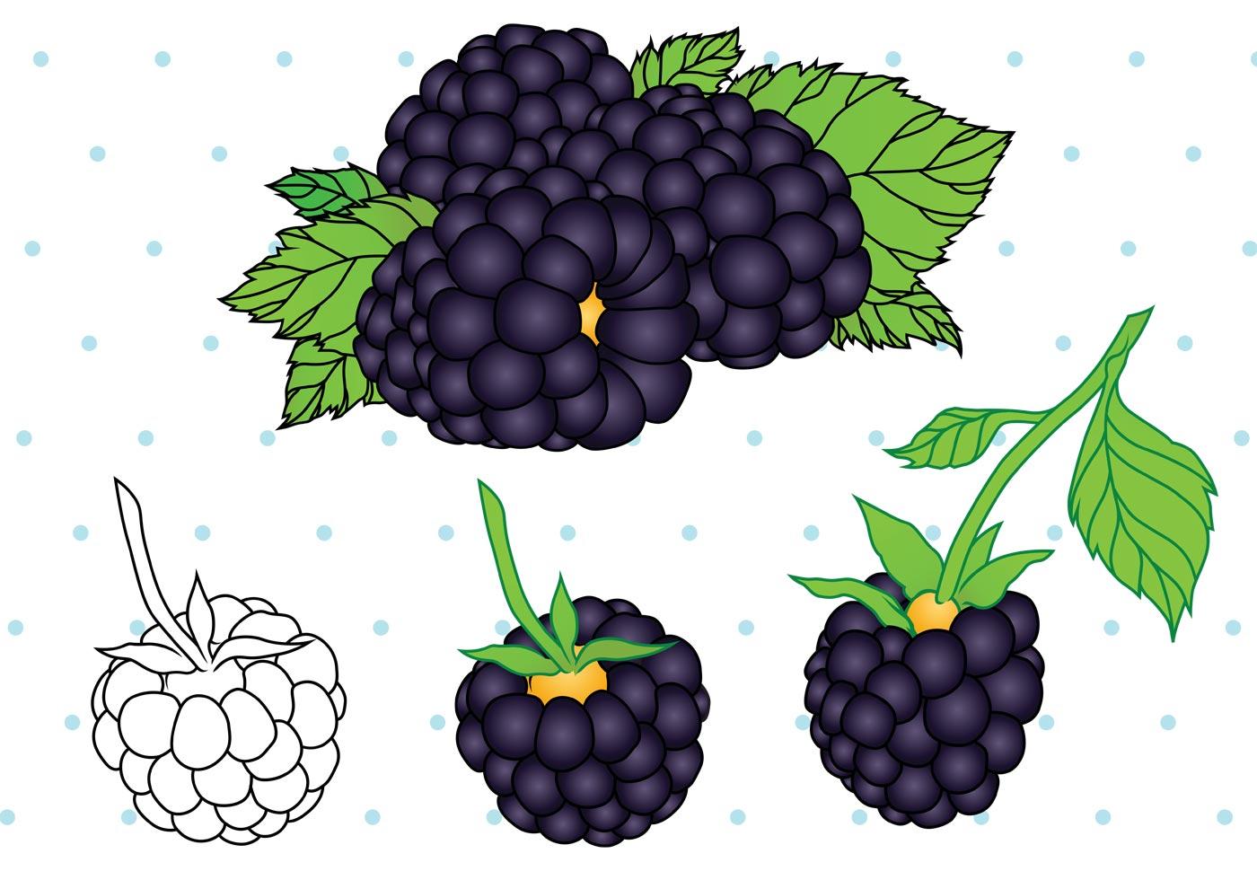 1400x980 Blueberries Free Vector Art