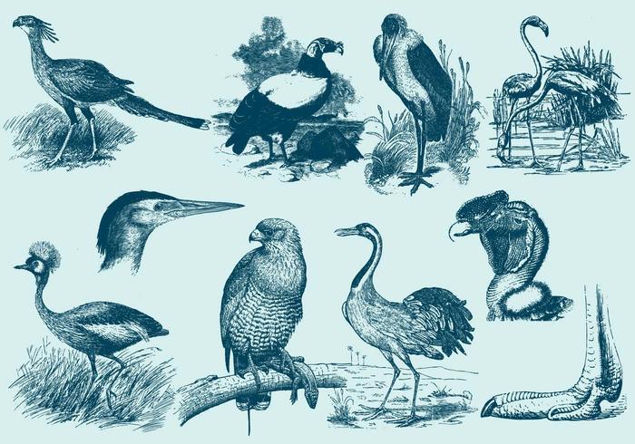 700x490 Big Bird Drawings