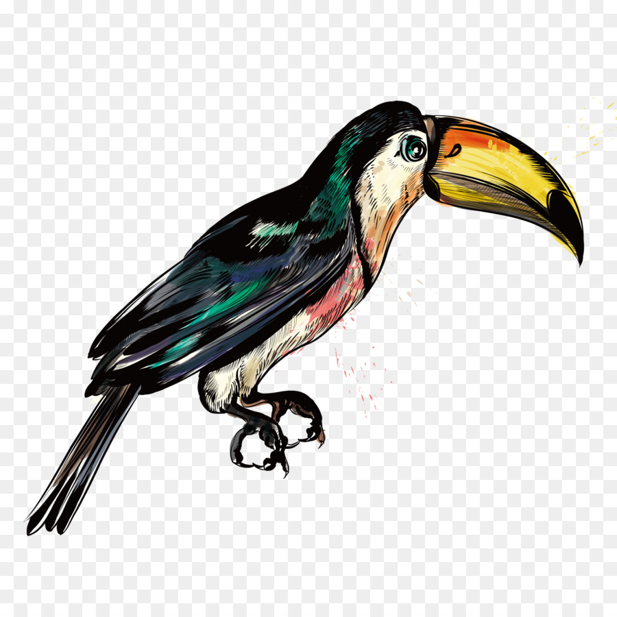 900x900 Big Bird Hummingbird Parrot