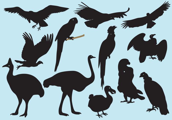 700x490 Big Bird Silhouettes