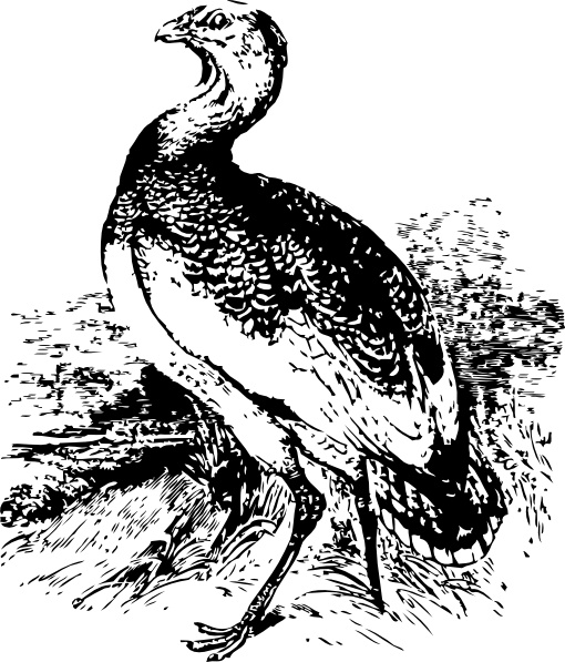 510x597 Big Bird Clip Art Free Vector In Open Office Drawing Svg ( .svg