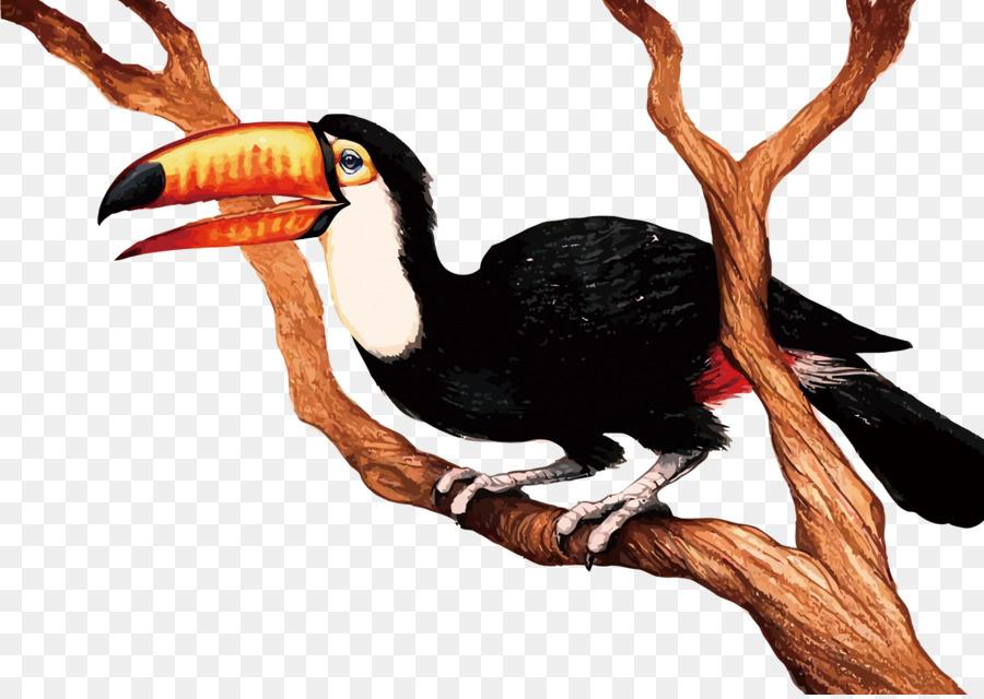 900x640 Bird Cartoon Clip Art