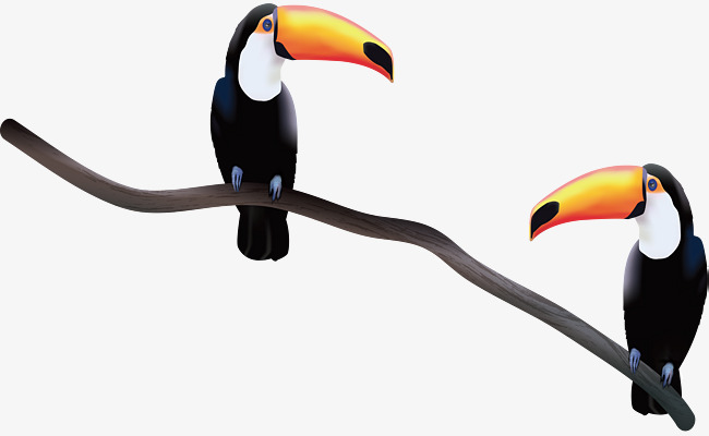 650x400 Standing On The Branches Of The Big Bird, Vector Png, Toucan