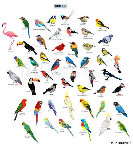 457x500 Big Set Birds. Birds Flying, Animals, Bird Silhouette, Bird Vector