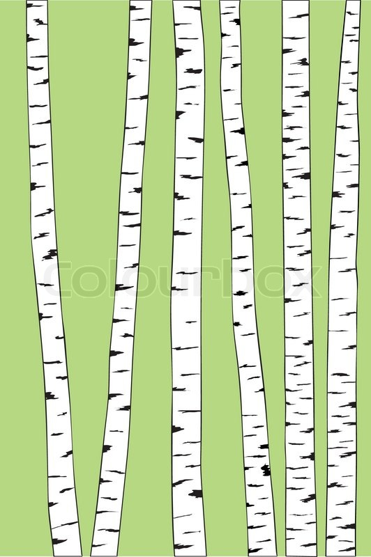 532x800 Birch Trunk Trees Background. Vector Illustration Stock Vector