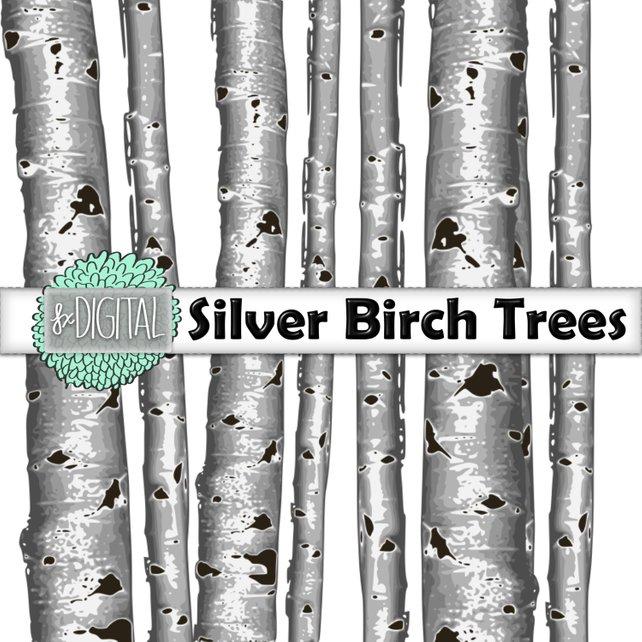 642x642 Birch Tree Clip Art Aspen Tree Clip Art Tree Clip Art Etsy
