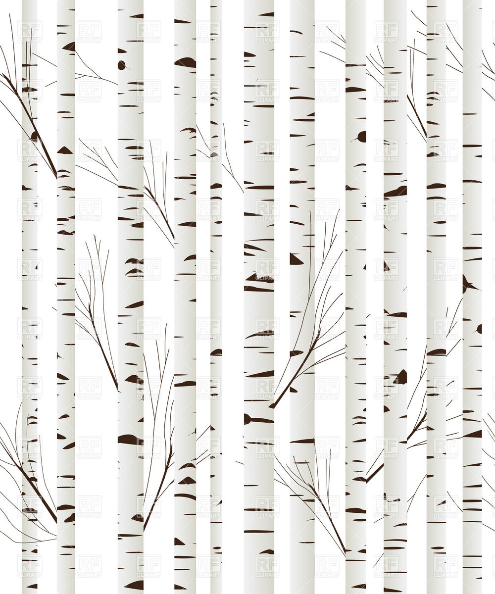 1000x1200 Birch Wood Trees Background Vector Image Vector Artwork Of
