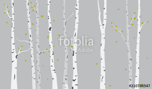 500x295 Birch Tree Silhouette Background Stock Image And Royalty Free