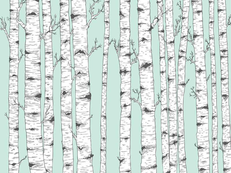 800x600 Birch Tree Vector By Josie Lyn