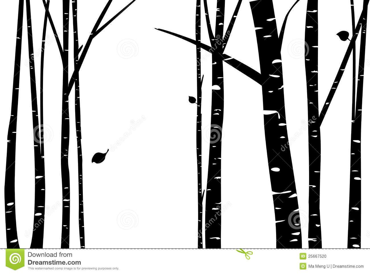 1300x962 Birch Tree Vector Birch Grove With Falling Leaf Silhouette. By