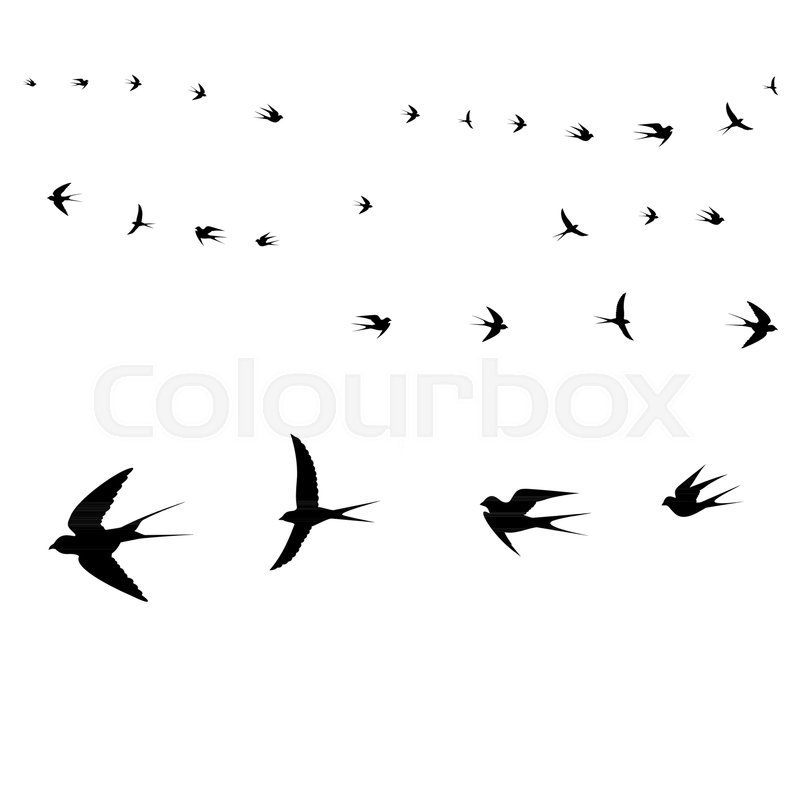 800x800 Birds Icons, Flying Birds,vector Illustration Stock Vector