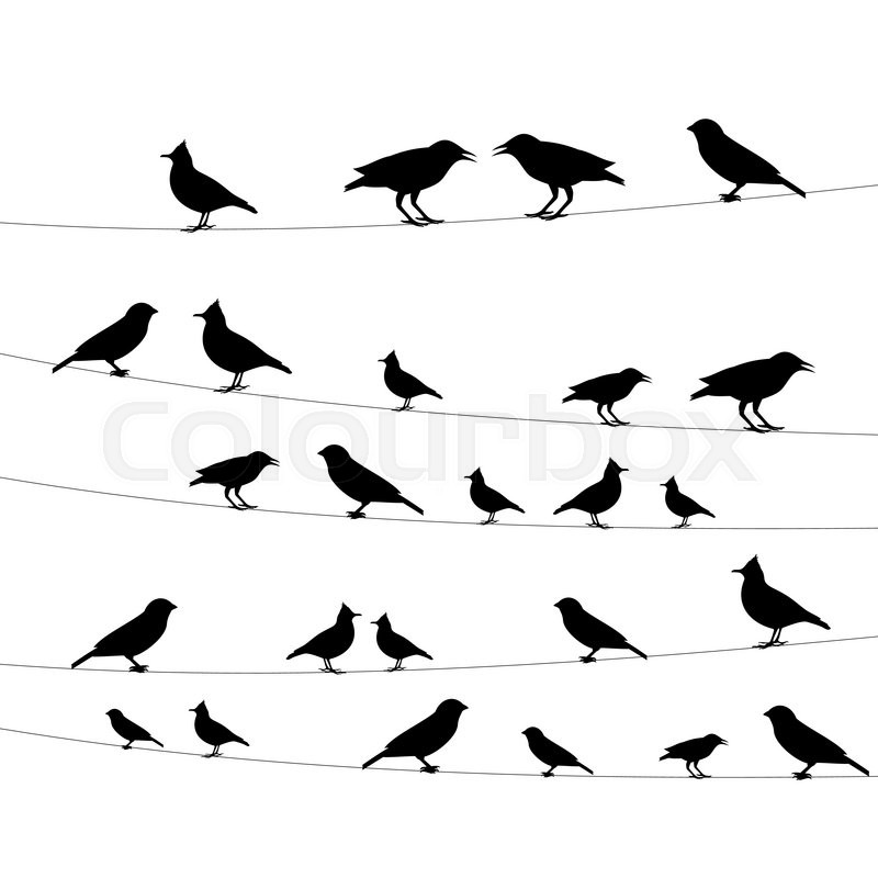 800x800 Birds On A Wire Icon,vector Illustration Stock Vector Colourbox